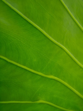 green leaf photo