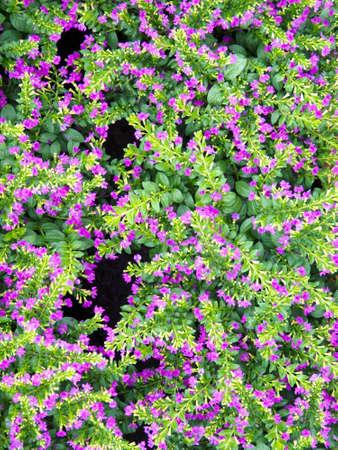 Flower Stock Photo - 10634768