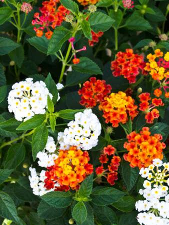 Flower photo