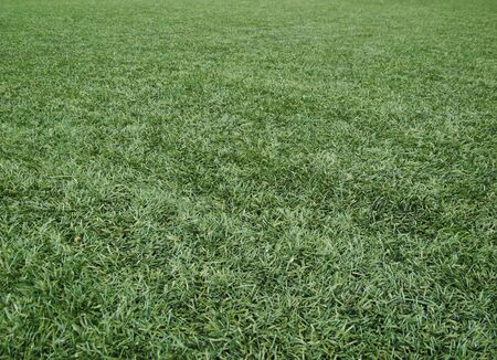 astroturf photo
