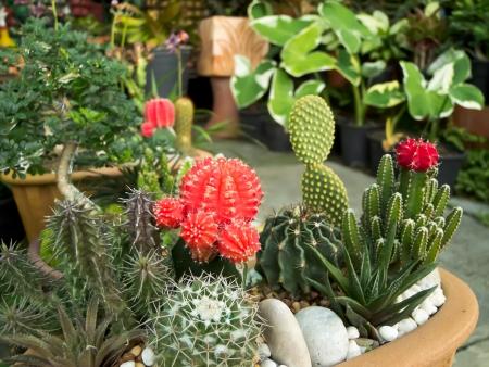 Cactus Stock Photo - 13816904