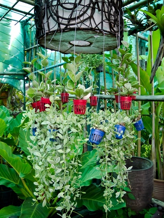flowerpot Stock Photo - 14040206