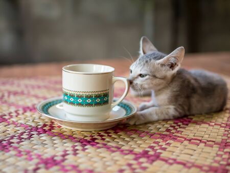 coffee cup with  kitten photo