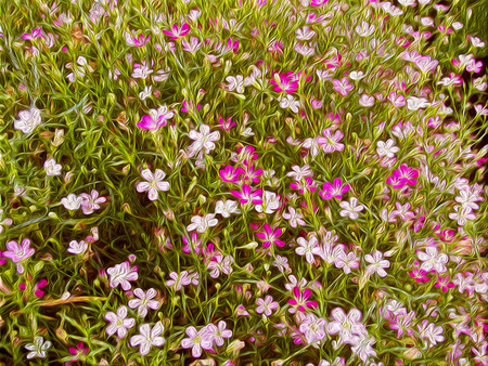 acryle: oil painted flowers