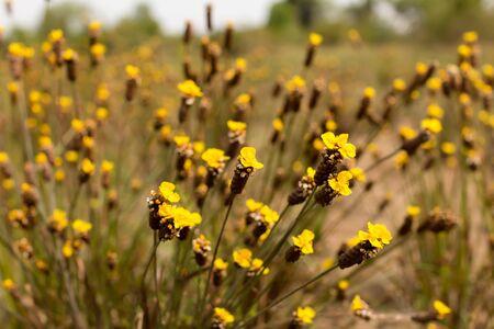 ourdoor: flower yellow