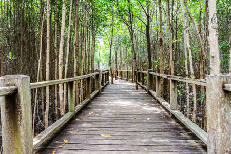 bridge in nature: A wooden bridge on mangrove forest