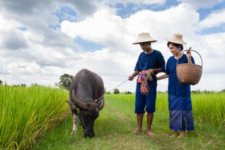 field of thai: Couple farmer in farmer suit with on rice fields Stock Photo