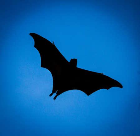 batman: Flying Fox flying