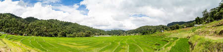 Panorama of the paddy rice field, Thailand photo