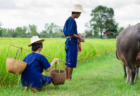 Couple farmer in farmer suit with on rice fields  photo