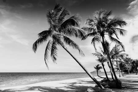 Black and white image of tropical beach,Thailand photo