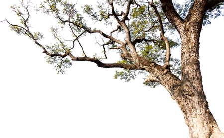 흰색 배경에 큰 나무