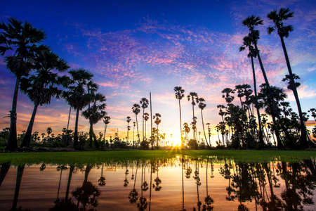 crepuscular: Palm trees on the background of a beautiful sunset Stock Photo