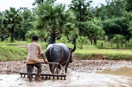 Farmer plowing a field using a buffalo, Thailand photo