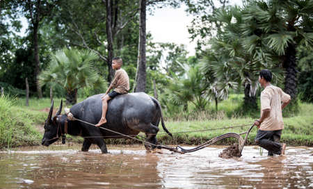 Happy boy riding water a buffalo photo