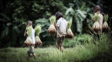 Little boy and girl farmer on green fields photo