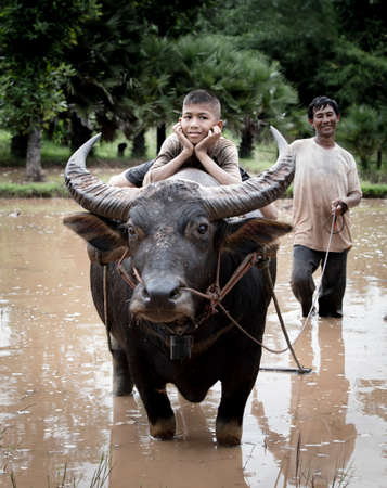 water buffalo: Happy boy riding water buffalo.