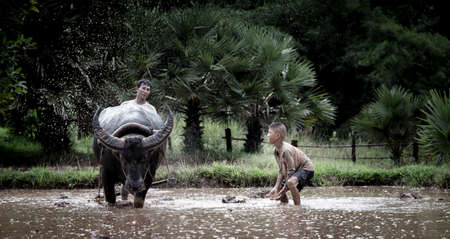 paddy fields: Asian farmer and son working with his buffalo Stock Photo