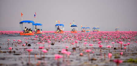thailand culture: Thai tourist take boat visiting sea of red water lily festival at Nonghan lake in Udon Thani,Thailand.