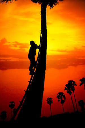 machete: Man climbing a sugar palm tree to collect sap in the countryside outside of Ayutthaya Province, Thailand