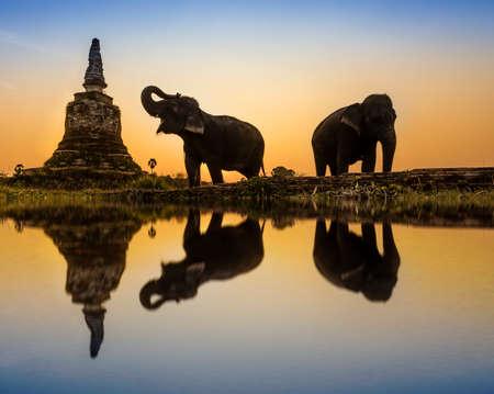 siluetas de elefantes: Puesta de sol en el campo de Tailandia