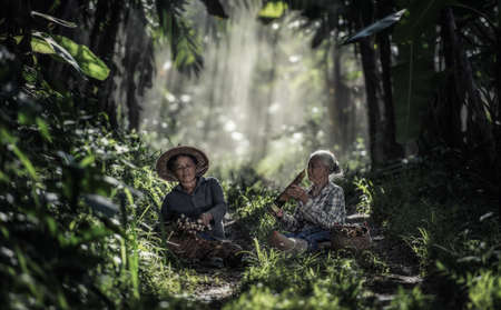 Asian old woman working in the rainforest, Thailand