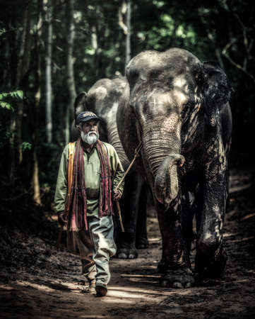 tourist site: A mahout walking with his elephant to go back home after bathing his elephant at a local lake. Ban Ta Klang is a well-known tourist site in Thailand. Editorial