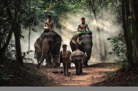 surin: Mahout at Surin Province, Thailand