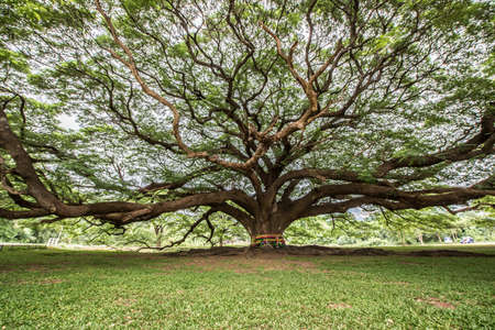 tree branch: Big tree with branch magnify