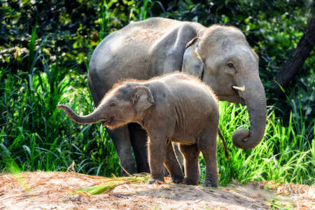 big5: Mother elephant with baby