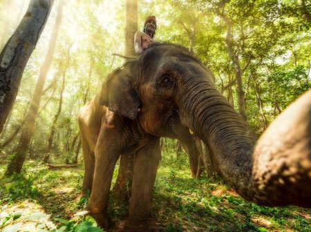 surin: Mahout @ Surin, Thailand