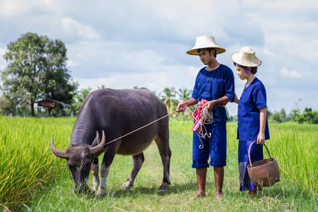 Couple farmer in farmer suit with on rice fields Stock Photo