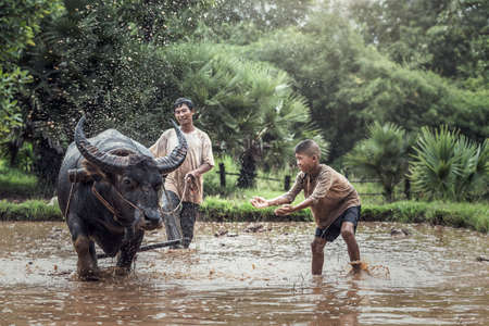 Asian farmer and son working with his buffalo Stockfoto