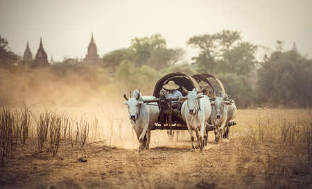 third world: Burmese rural man driving wooden cart with hay on dusty road drawn