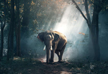 Elephants in the forest 版權商用圖片