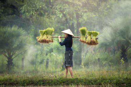 Mujer Los agricultores cultivan arroz en la temporada de lluvias. Estaban empapados con agua y barro para prepararse para la siembra. Espera tres meses para cosechar Foto de archivo - 75553094