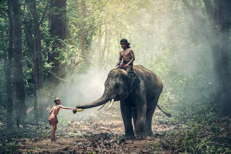 Little asian boy feeding elephant, countryside in Thailand