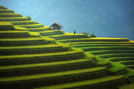 Rice fields on terraced in rainny season at Mu cang chai, Vietnam. Rice fields prepare for transplant at Northwest Vietnam