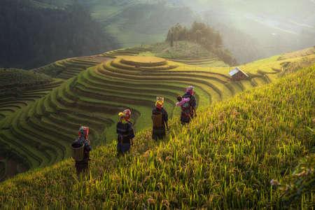 Farmer in Rice fields on terraced in rainny season at Mu cang chai, Vietnam. Rice fields prepare for transplant at Northwest Vietnam Standard-Bild
