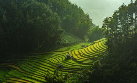 Rice fields on terraced of Mu Cang Chai, YenBai, Vietnam. Rice fields prepare the harvest at Northwest Vietnam.Vietnam landscapes. Stock Photo
