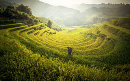 Farmer in Rice fields on terraced in rainny season at Mu cang chai, Vietnam. Rice fields prepare for transplant at Northwest Vietnam Stock Photo