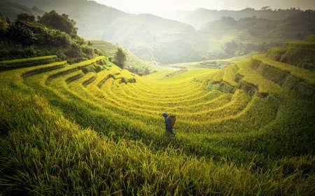 Farmer in Rice fields on terraced in rainny season at Mu cang chai, Vietnam. Rice fields prepare for transplant at Northwest Vietnam Zdjęcie Seryjne
