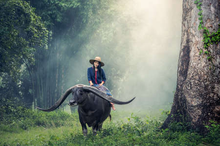 Asian woman farmer with a buffalo
