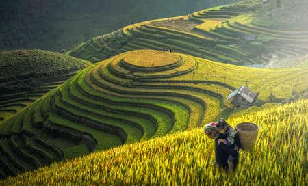 Madre y Dauther Hmong, trabajando en terrazas de arroz, Mu Cang Chai, Vietnam Foto de archivo - 75714570