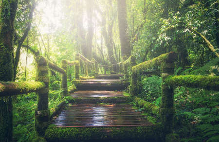 Wooden bridge in tropical rain forest Stock Photo - 75714578