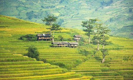 Vietnam Rice fields on terraced in rainny season at Mu cang chai, Vietnam. Rice fields prepare for transplant at Northwest Vietnam Stock Photo