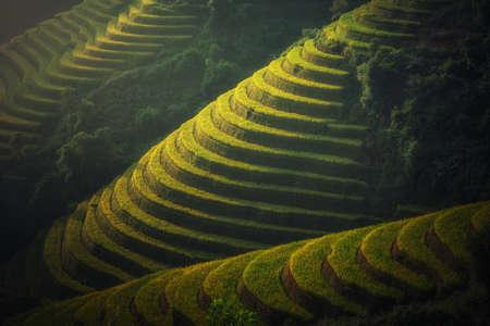 Vietnam Rice fields on terraced in rainy season at Mu cang chai, Vietnam. Rice fields prepare for transplant at Northwest Vietnam Stock Photo