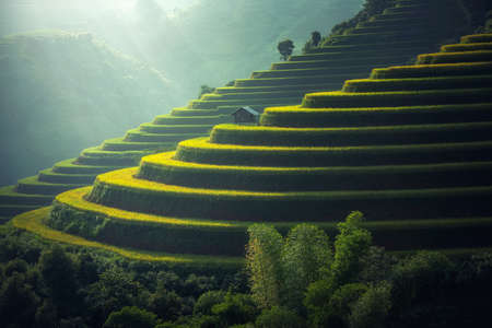 Vietnam Arroz campos en terrazas en la temporada de lluvias en Mu cang chai, Vietnam. Los campos de arroz se preparan para el trasplante en el noroeste de Vietnam Foto de archivo - 75747472