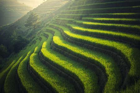 northwest: Vietnam Rice fields on terraced in rainy season at Mu cang chai, Vietnam. Rice fields prepare for transplant at Northwest Vietnam Stock Photo