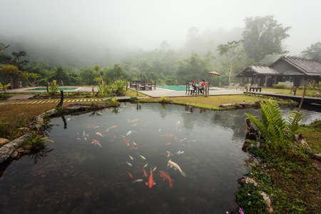 koi: Tropical garden pool in the morning Stock Photo